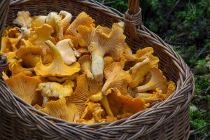 fungus, mushroom, sponge